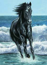 Black Stallion Blanket